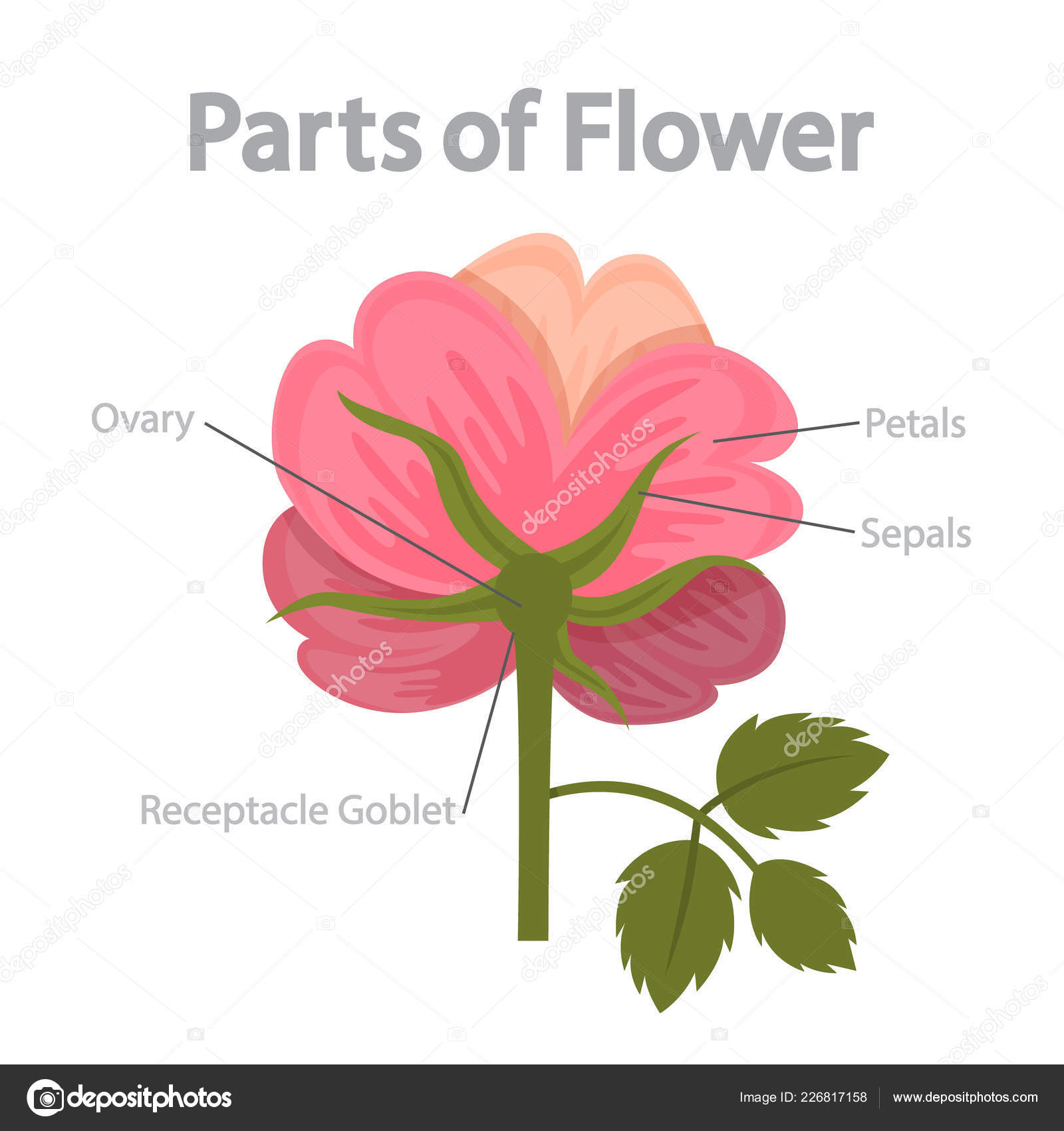 Flower Part Infographics Biology Education Concept Flora Anatomy