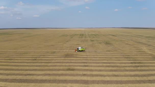 Una mietitrebbia agricola aratri il campo. Vista aerea. Raccolta del grano. Agricoltura. Agricoltura.