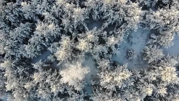 Zasněžené stromy letecký záběr na DRONY. Záběry z dokonalé zimní víla krajina s borovým lesem, střílel z výše