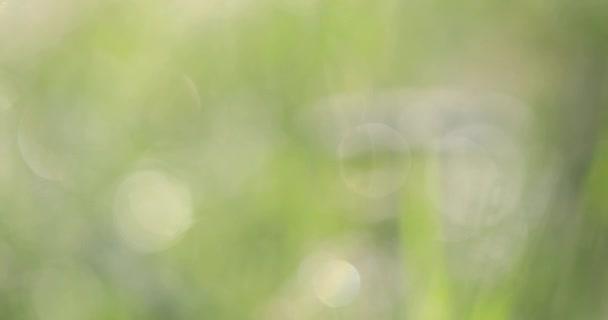 Bokeh na trávě. Na zeleném pozadí pozadí rozmazané jasná místa.