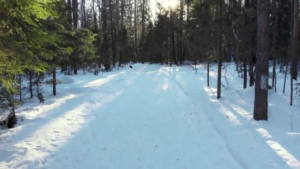 Skiers ride on the ski run through the woods. Shot with quadracopter Sunny winter day.