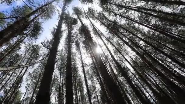 A napfény sugara áttöri a fákat
