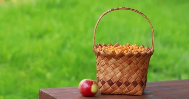 Sklízení jablek. Holka vybírá ovoce v koši. Ruce zavřít