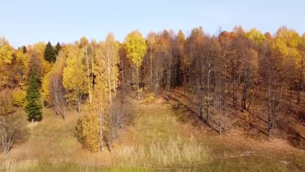 Horní pohled na podzimní les za jasného slunečného počasí. Quadcopter létá nad vrcholky stromů se svůdným zlatým, oranžovým a žlutým listím