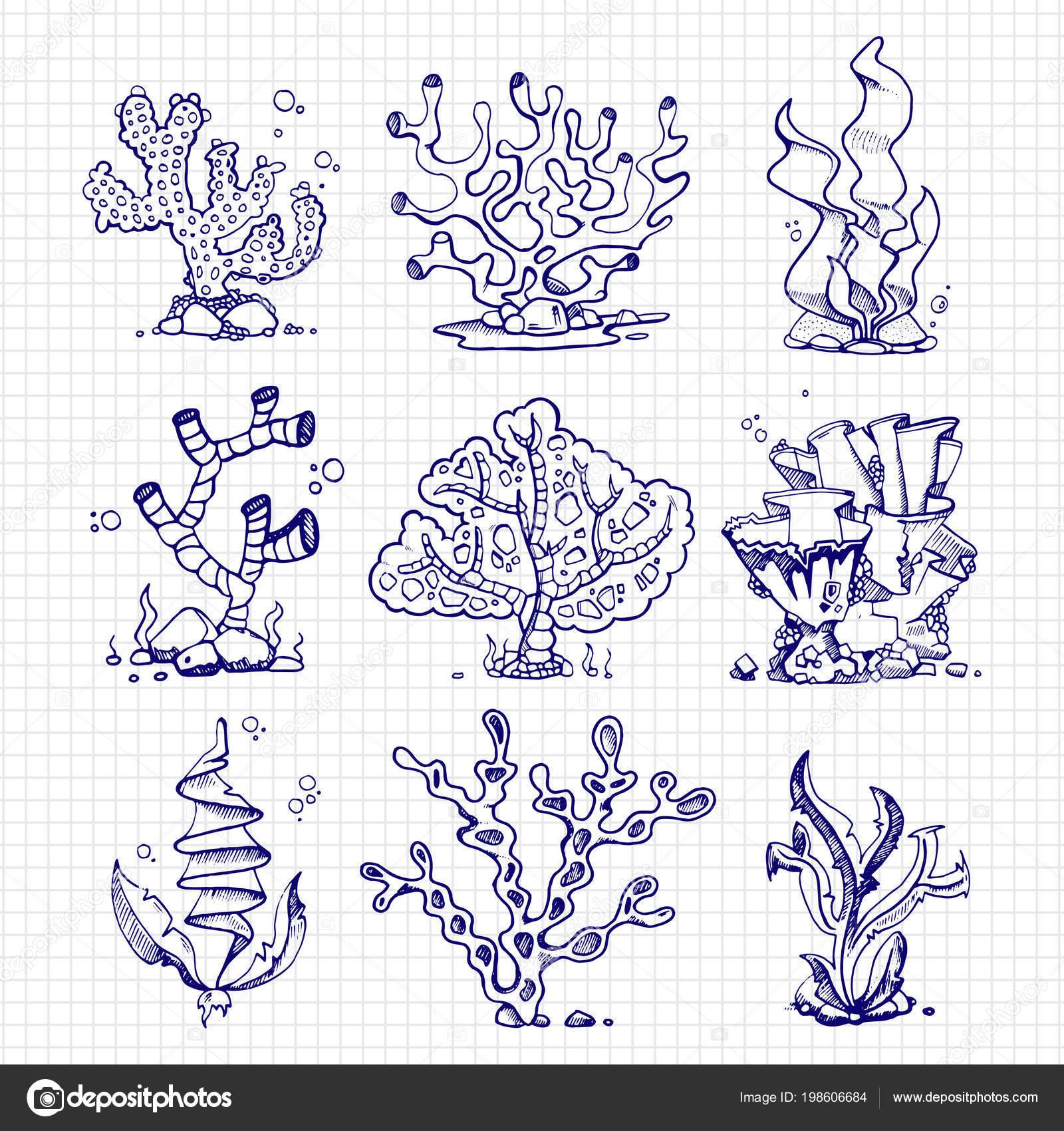 Zeichnen Von Algen Korallen Unterwasserpflanzen Kugelschreiber