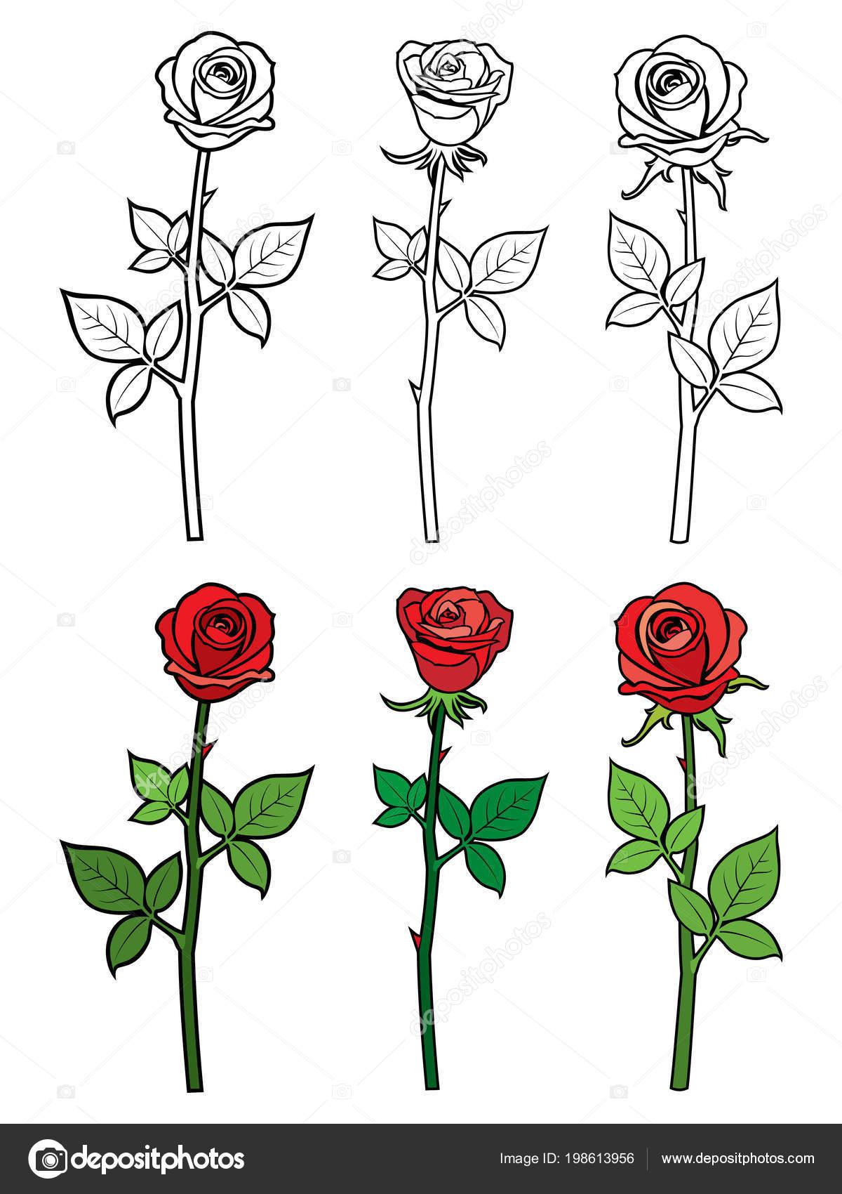 Rosas Rojas Para Colorear Mano Dibujar El Esquema Y Rosas Rojas
