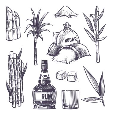 Hand drawn cane leaves, sugar plant stalks, sugarcane farm harvest, glass and bottle of rum. Vector set in vintage engraving style