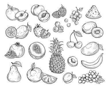Sketch fruits. Strawberry melon, peach mango. Banana pineapple, raspberry grapes hand drawn fruit berry vector set