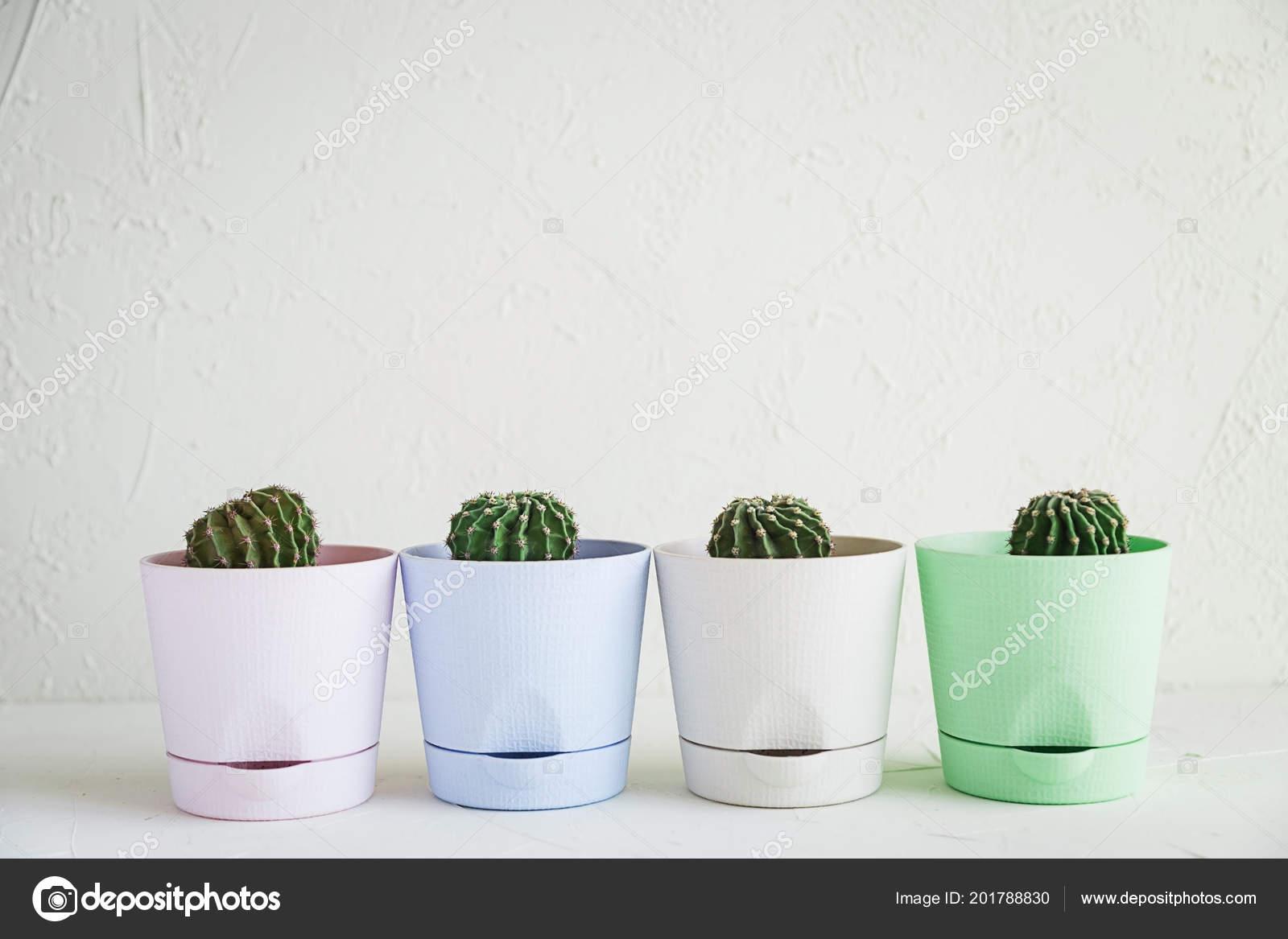 Mini Kaktusy W Małe Doniczki Biały Zdjęcie Stockowe