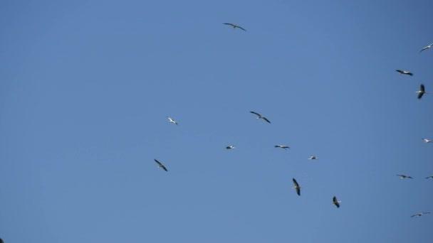 Skupina čápů v kruhu vysoko na obloze