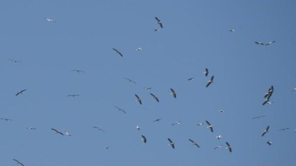 Repül a kör izgatott gólya csoport magasan az égen