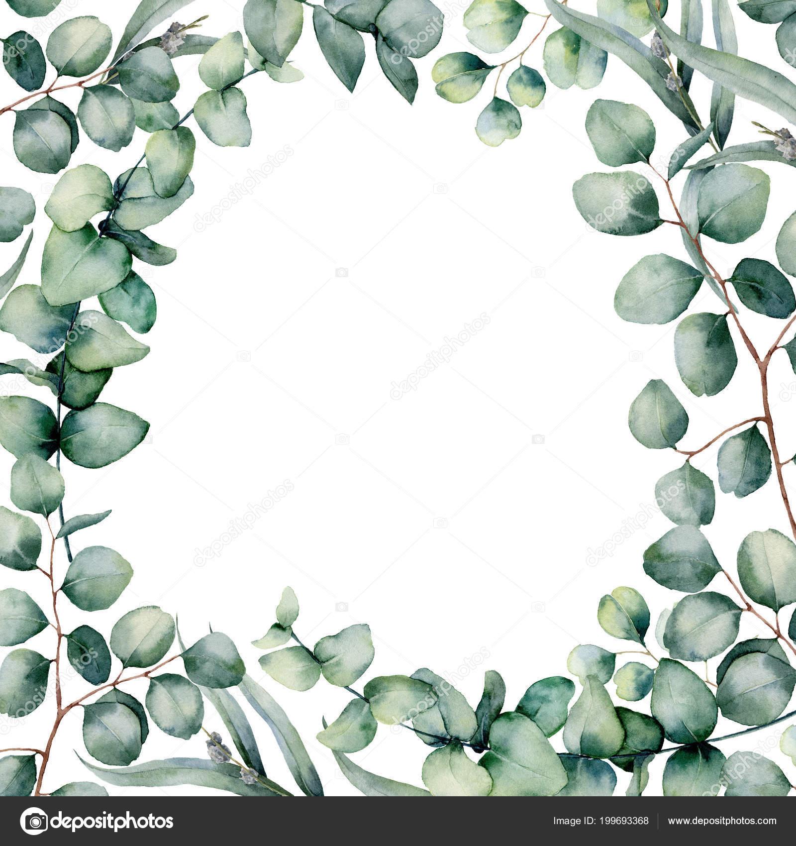 Acuarela eucaliptus hojas de marco. Pintado a mano de bebé, cabeza ...