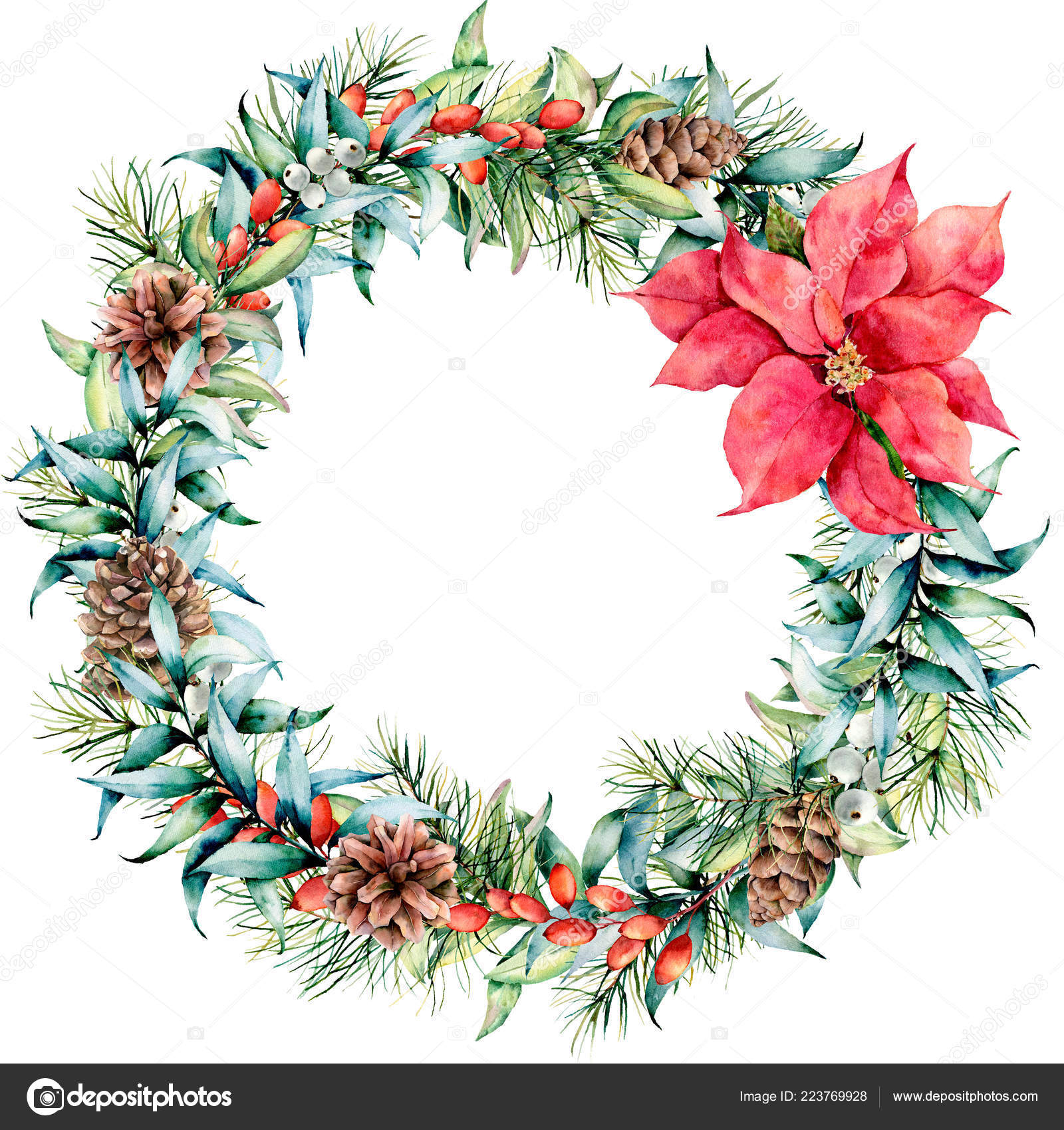 Watercolor Christmas Wreath With Eucalyptus And Poinsettia Hand Painted Fir Border With Cones Berries Eucalyptus Leaves Isolated On White Background Holiday Floral Illustration For Design Print Stock Photo Image By C
