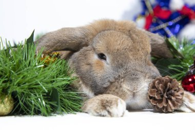 Home decorative rabbit on a decorated background in the New Year's style. Christmas decorations with pine cones and gifts with tinsel. Christmas and New Year holidays.