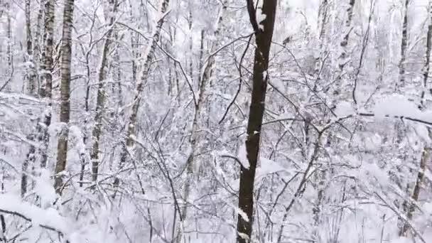 verschneiter Winterwald. Schneebedeckte Äste von Bäumen vor blauem Himmel. Auf Drohnen-Hubschraubern zwischen Dörfern.