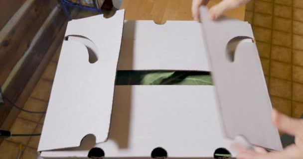 Doboz friss tápláló zöldség része a Közösség által támogatott mezőgazdaság doboz