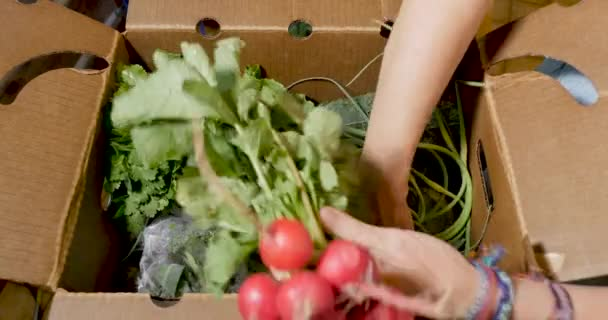 Hand going through a box of fresh organic, seasonal fruit and vegetables
