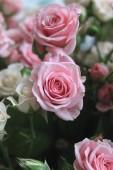 close up shot of fresh rose flowers