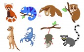 Fotografie Set of 8 exotic animals in a cartoon style.