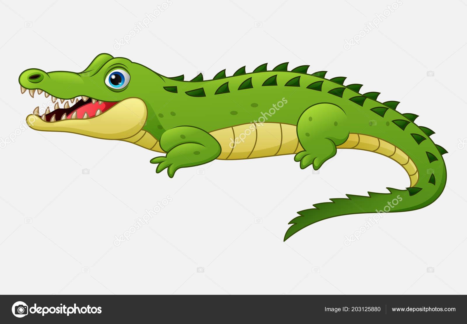 Crocodile dessin anim isol sur fond blanc image vectorielle dreamcreation01 203125880 - Dessin anime crocodile ...