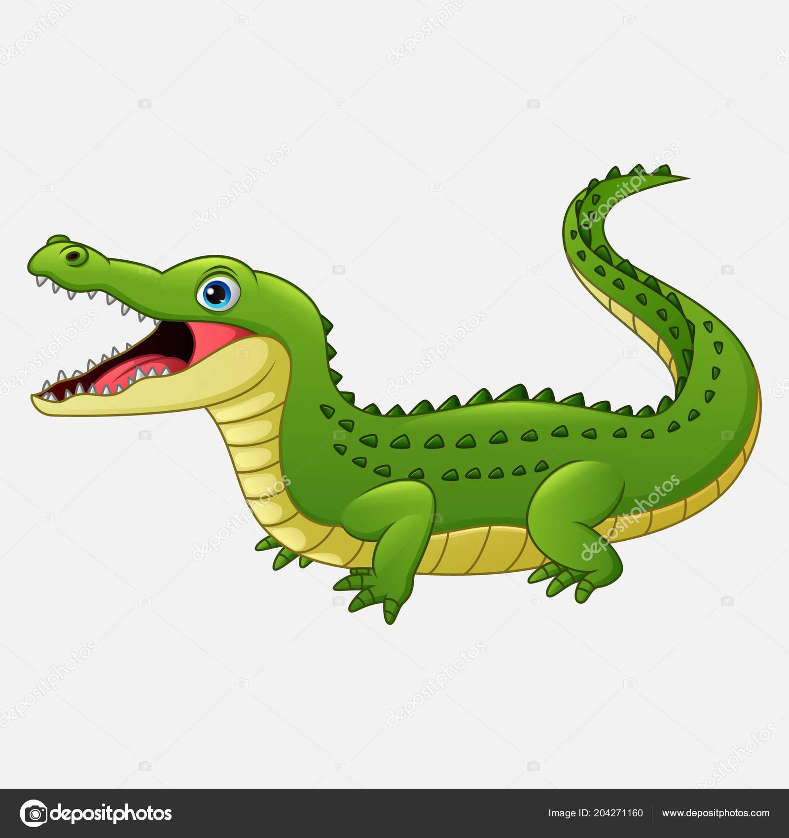 Crocodile dessin anim isol sur fond blanc image vectorielle dreamcreation01 204271160 - Dessin anime les crocodiles ...