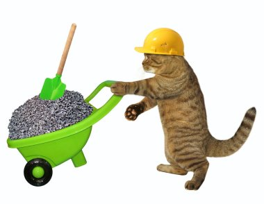 The cat laborer in a safety helmet pushes the green wheelbarrow with gravel. White background.