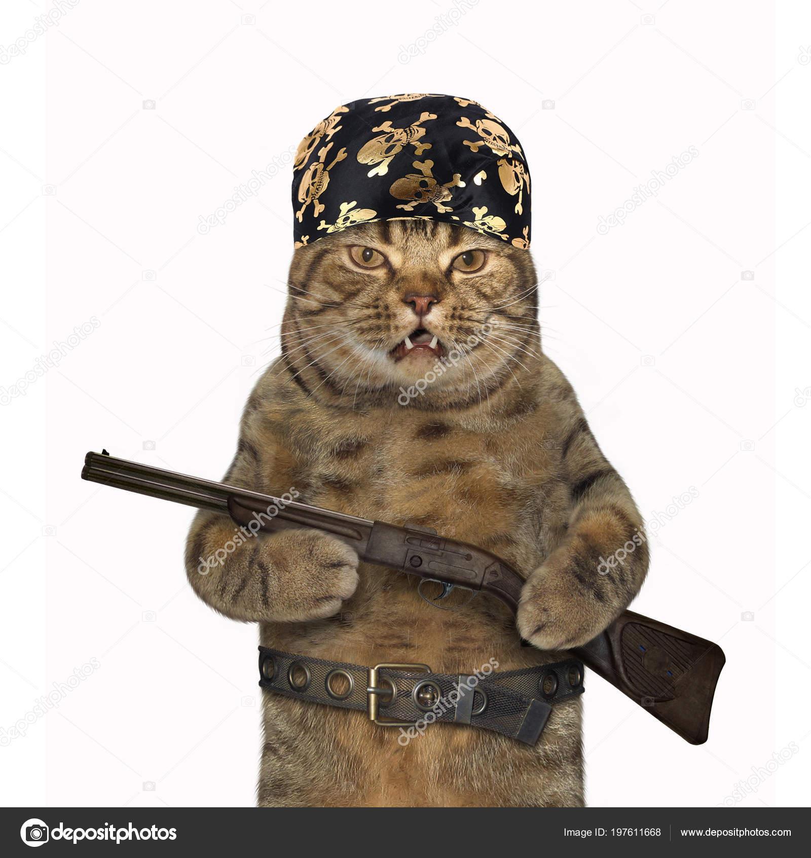 kočička mladá chlupatá