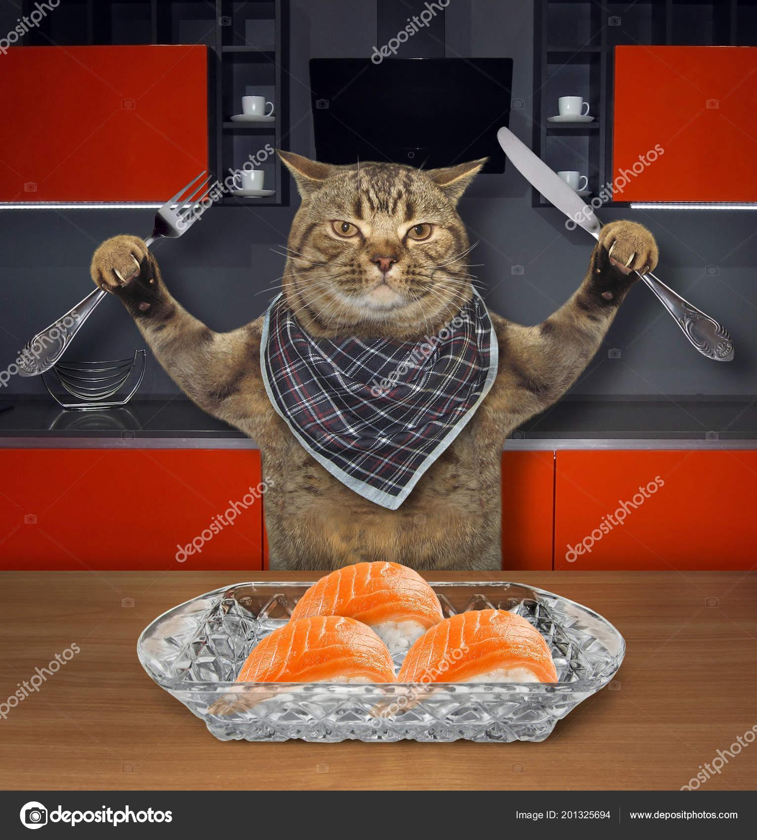το μαχαίρι της γάτας