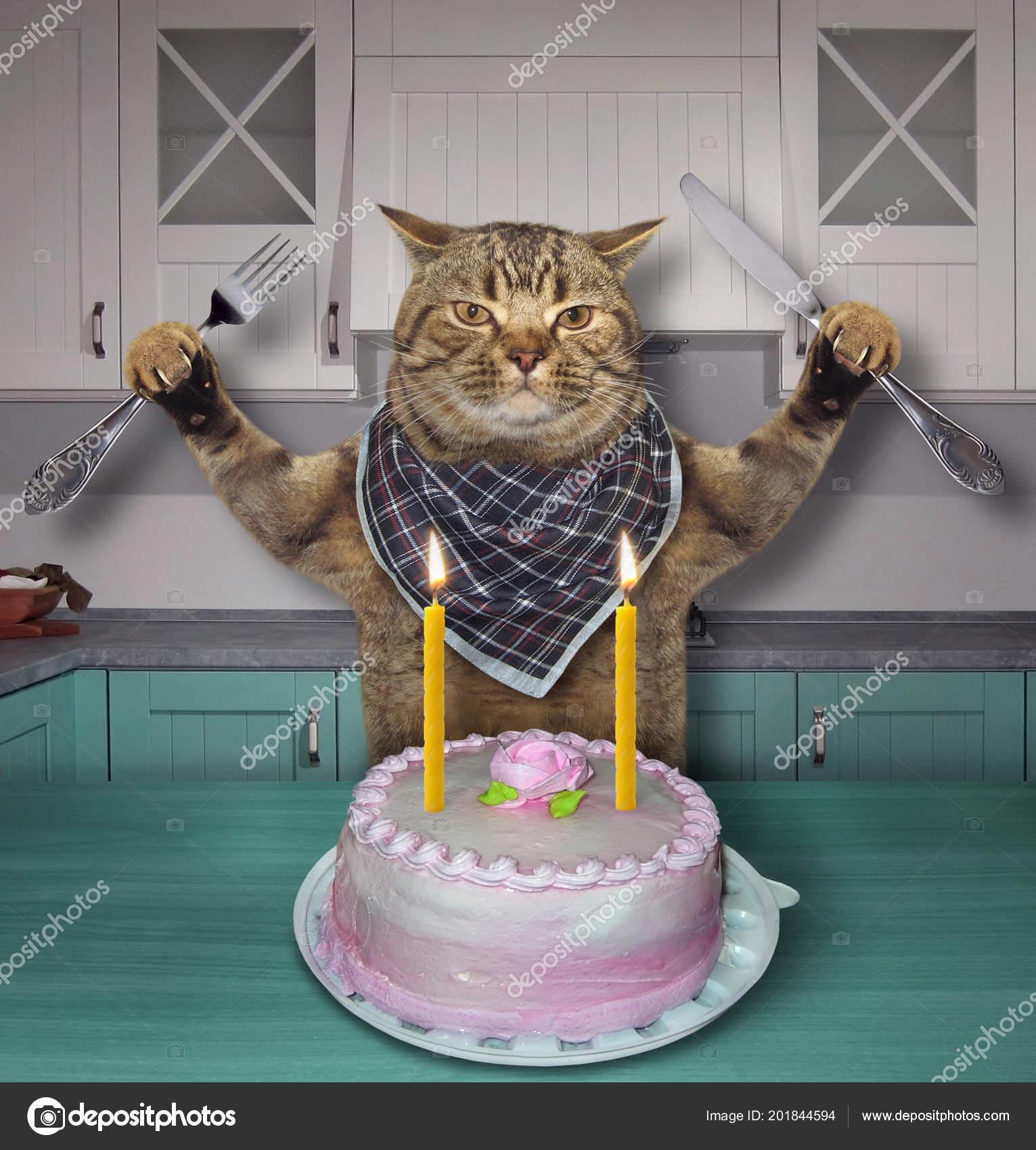 Chat Avec Couteau Une Fourchette Mange Gâteau Anniversaire Avec Des