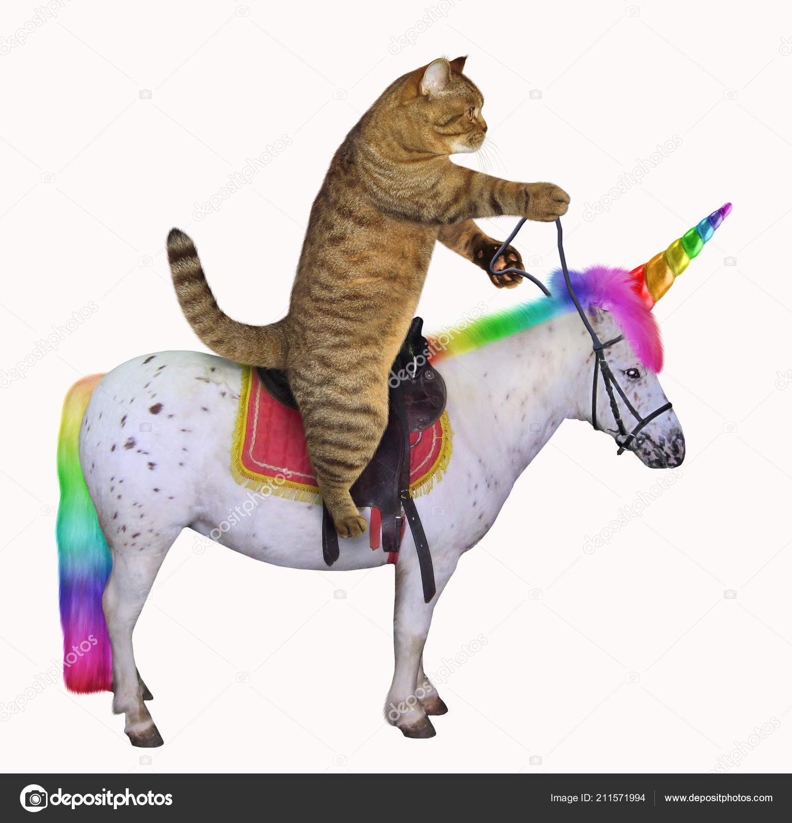 Cat Riding Real Unicorn White Background Stock Photo C Iridi