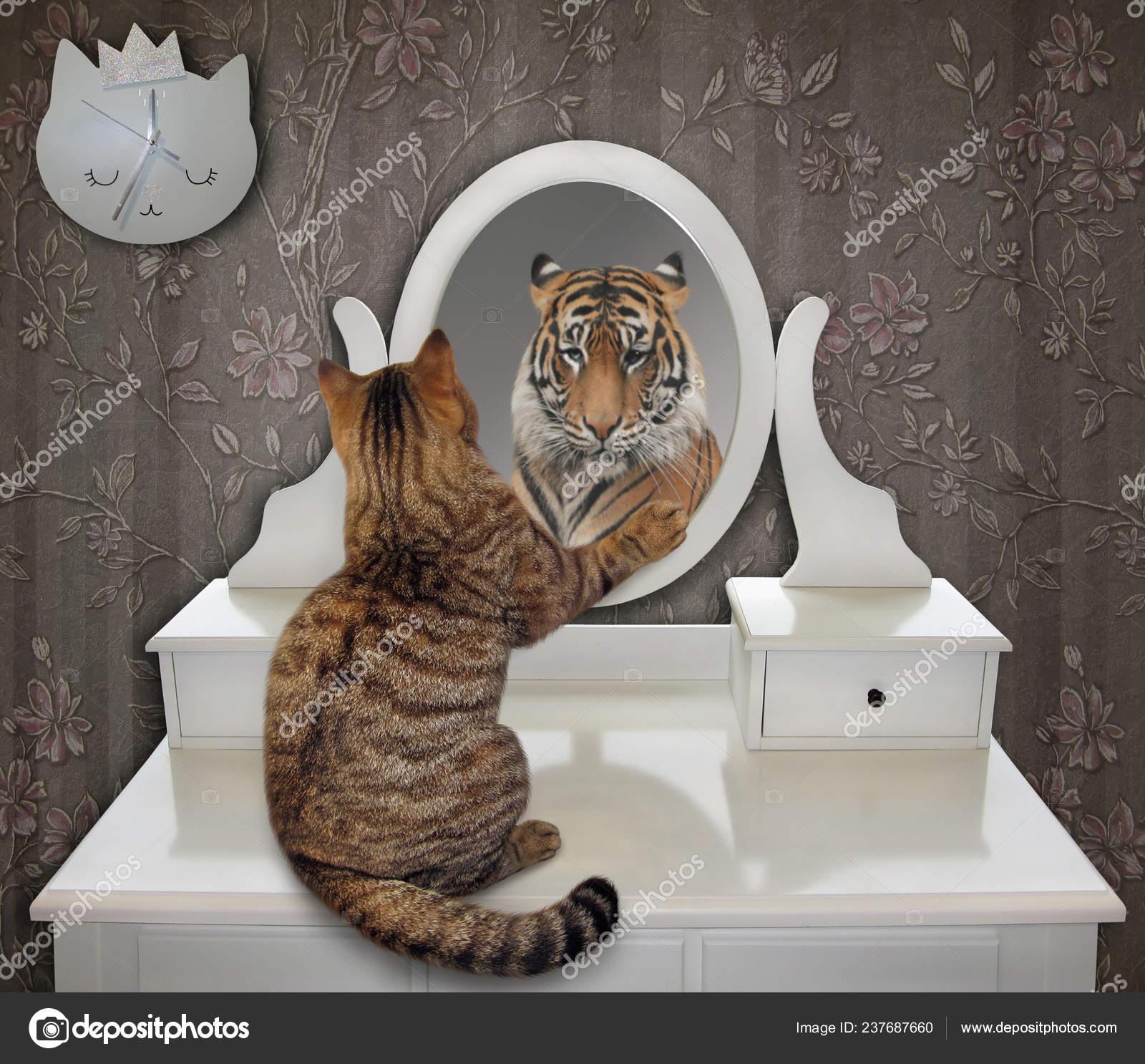 Lion mirror cat CAT LION