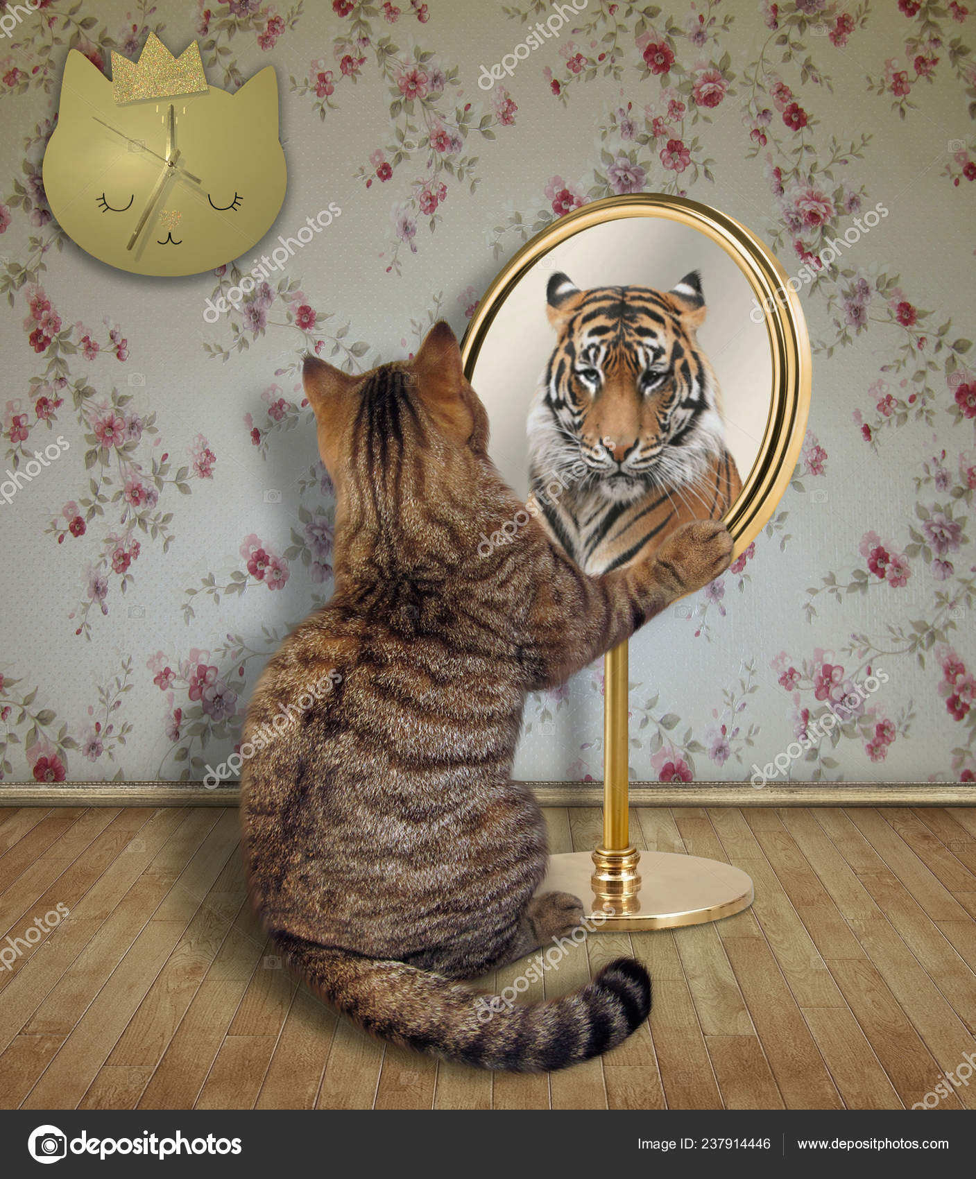 Funny reflection | Cat Looking His Funny Reflection Mirror