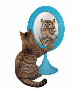 Cat looks at its reflection 2
