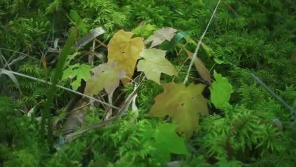 Jasně zelené trávy a listí stromů pokryl v létě lese