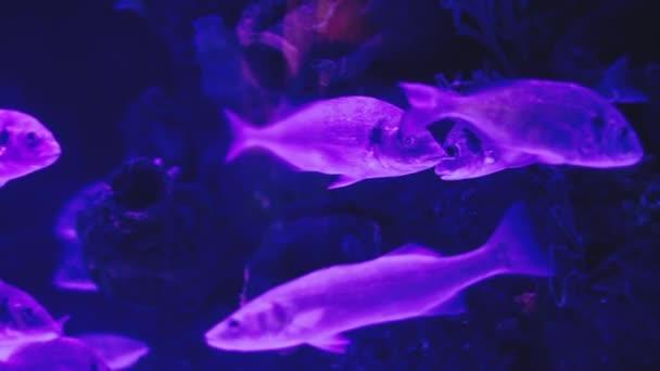 Gruppo di pesci di mare sottacqua in mare. Mondo subacqueo con i pesci di corallo