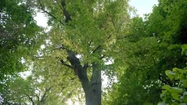 V parku jsou vysoké opadavé stromy. Korunky opadavých stromů v parku