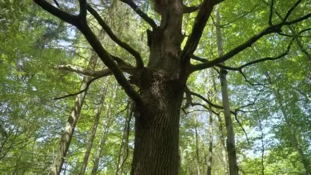 Tall száraz fa között élénk erdőben. Fa száraz ágak nyári erdőben