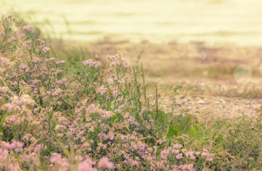 """Картина, постер, плакат, фотообои """"Дикие полевые сиреневые цветы на морском побережье, осенний пейзаж, естественный фон"""", артикул 305240622"""