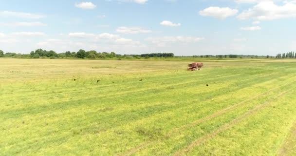 Kombajn v poli. Sklizeň, zemědělství.