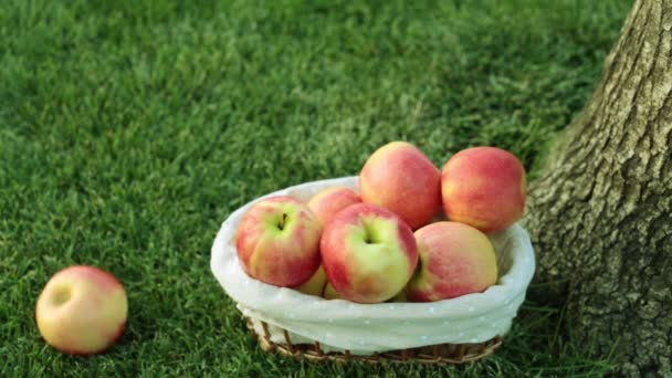 Beautiful juicy apple on a background of grass. Harvest of apples.