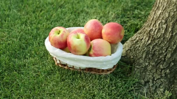 Harvest of apples. Beautiful juicy apple on a background of grass.