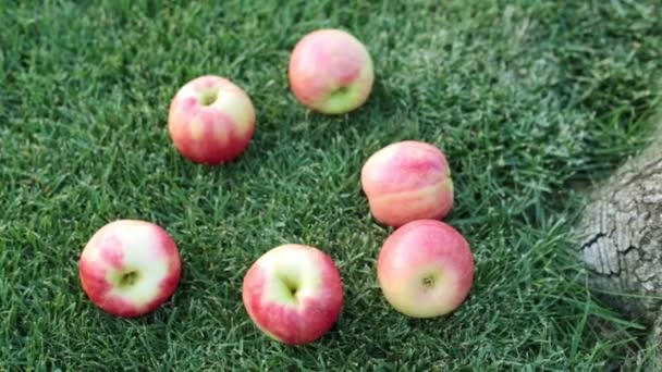 Red apples on green grass.