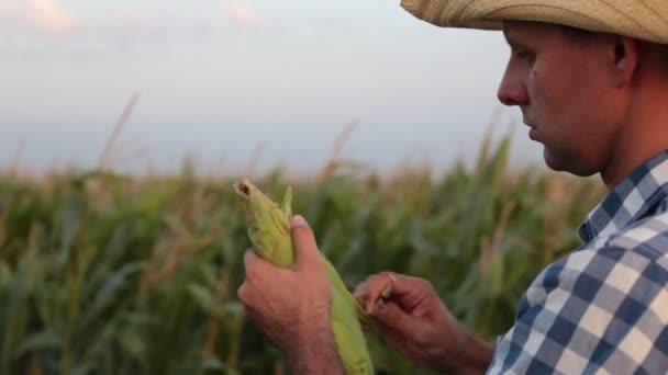 A man is a farmer in a field of corn.