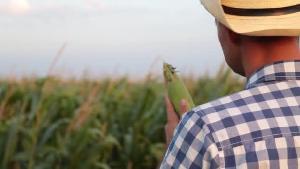 Farmář v oblasti kukuřice, sklizně, zemědělství
