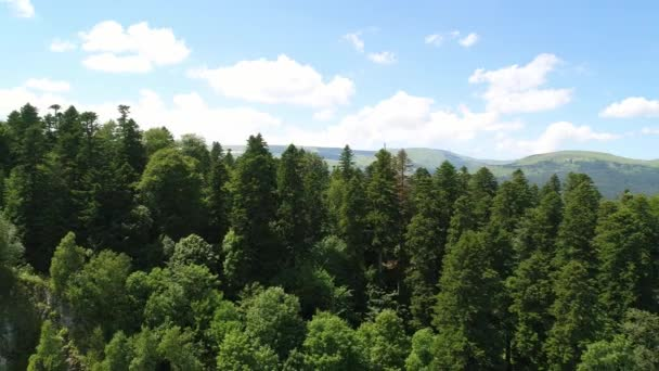 Zelený Les, hory a letícího ptáka, letecký pohled
