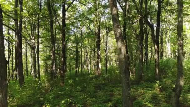Zelený les a stromy. Let v lese.