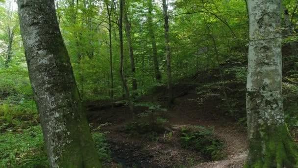 Divoké zelený Les, stezka v lese, krásná příroda.