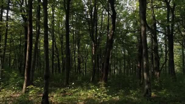 Krásná příroda, stromy a zelený Les