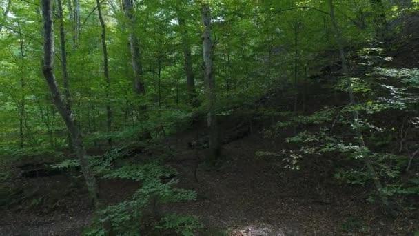 Krásný zelený les. Stromy, přírodní pozadí