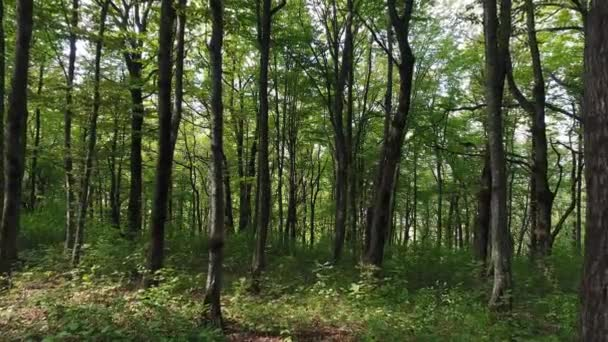 Summer, green wild forest, trees, beautiful nature.
